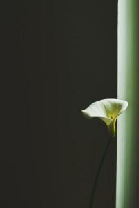Bambus a lilie